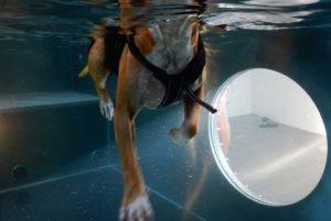 PHYSIObox Hydrotherapie für Hunde