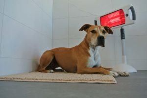 PHYSIObox Infrarot und Moxa-Lampe für Hunde