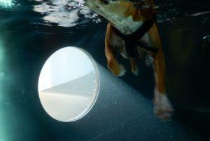 PHYSIObox Schwimmtherapie für Hunde