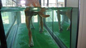 PHYSIObox Unterwasserlaufband für Hunde