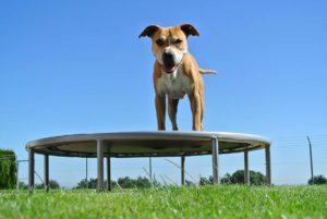 PHYSIObox Verbesserung Balance für Hunde
